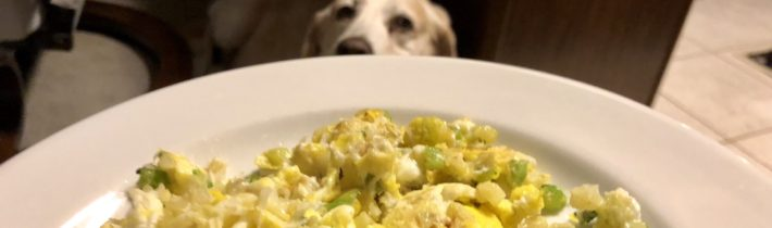Who Said Brunch? Your Dog.