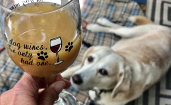 Barkmosas For Dogs! A Brunch Necessity!